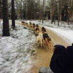 husky_rovaniemi