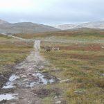 reindeers_halddetoppen2