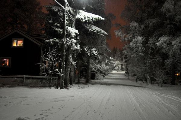 Snowtreesfinland
