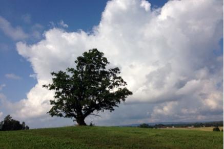 Treesummer